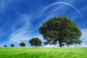 scenery trees 3d