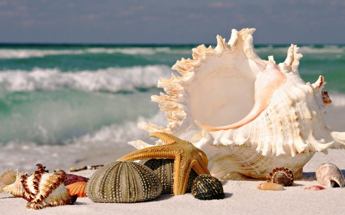 sea hd images