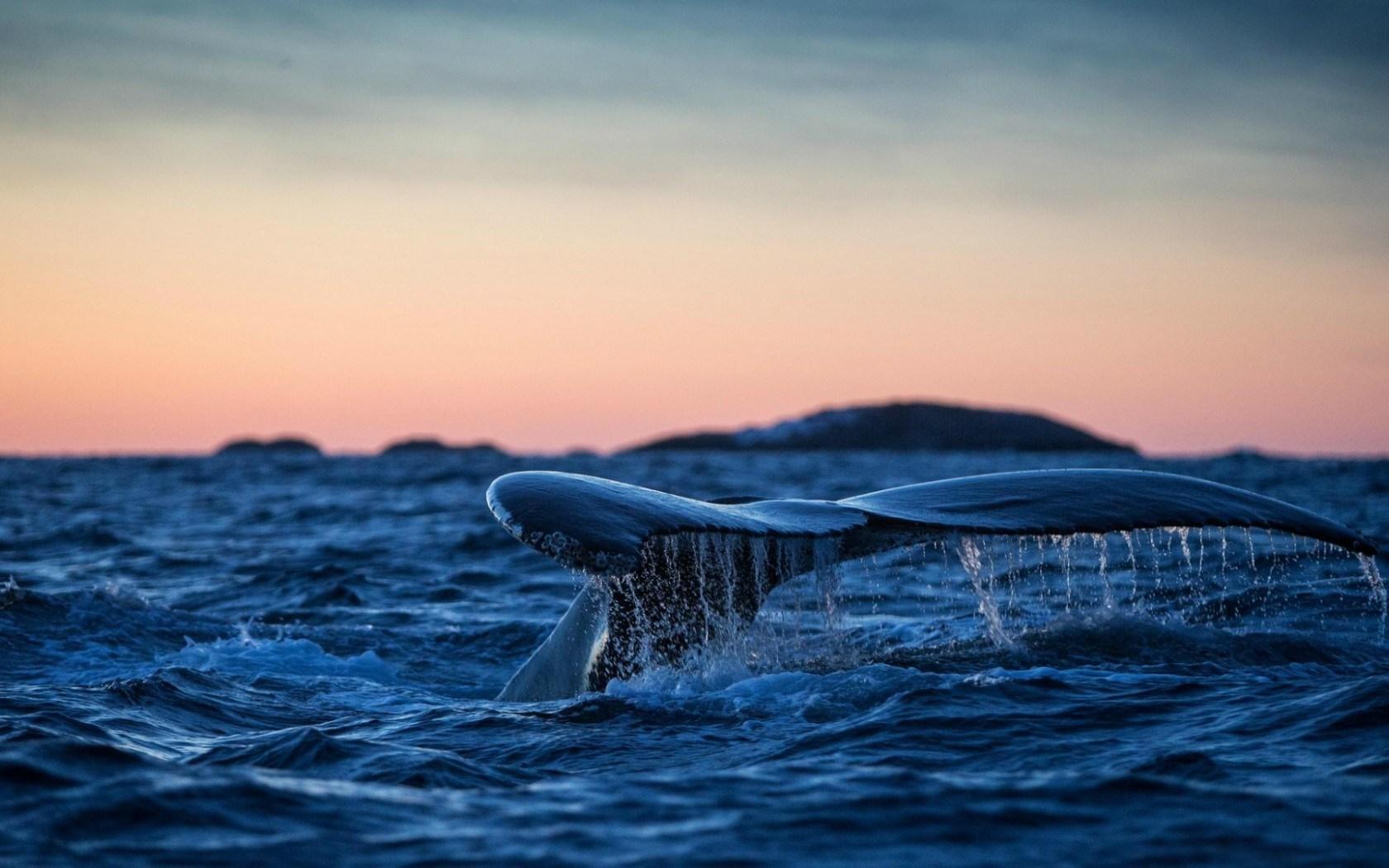 sea whale wallpaper