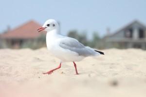 seagull bird cute