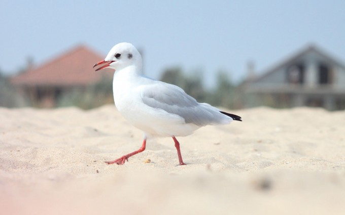 seagull bird cute