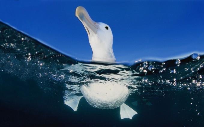 seagull sea wallpaper
