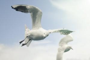 seagulls cool