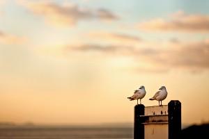 seagulls sunset beautiful