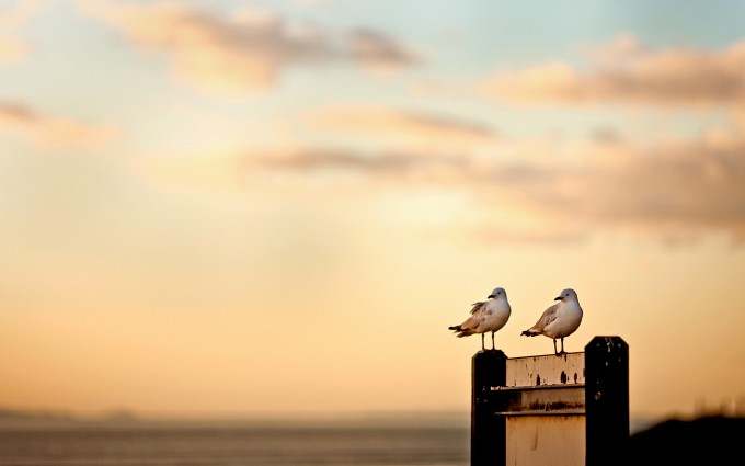 seagulls sunset beautiful