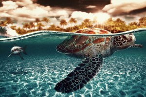 seaturtle sea