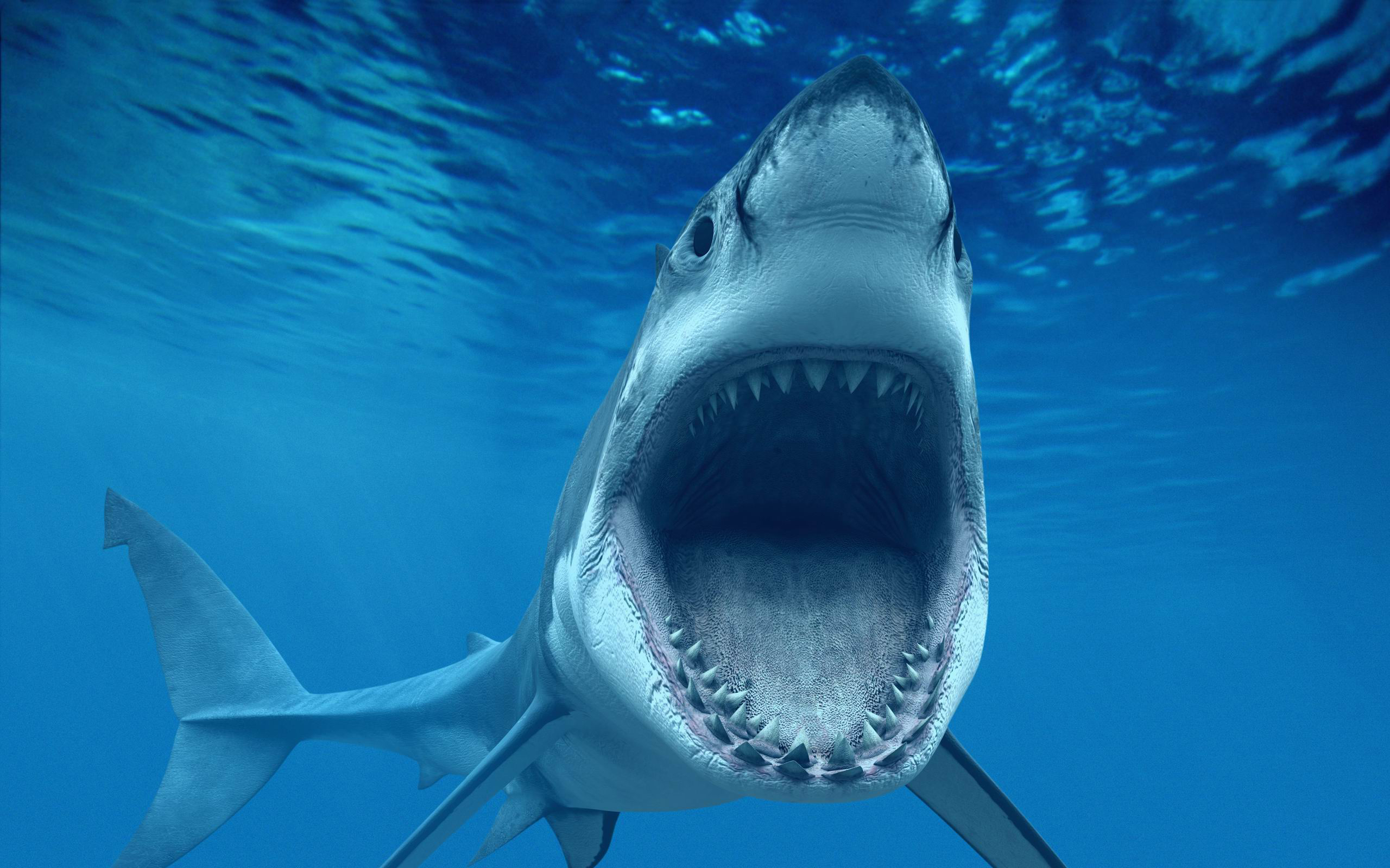 shark attack wallpaper hd