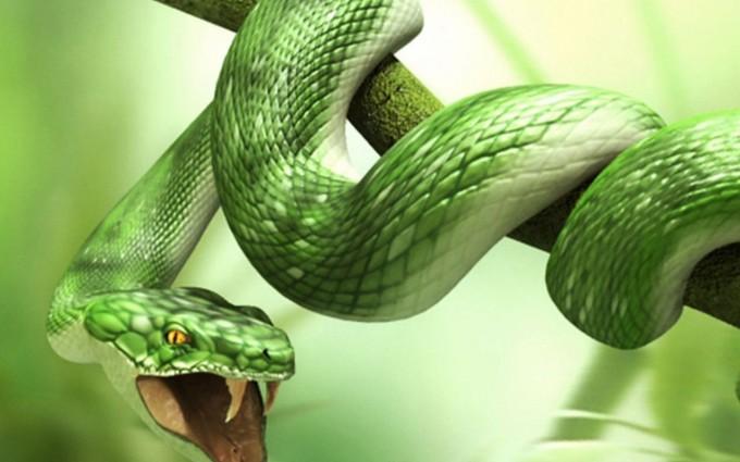 snake pc background