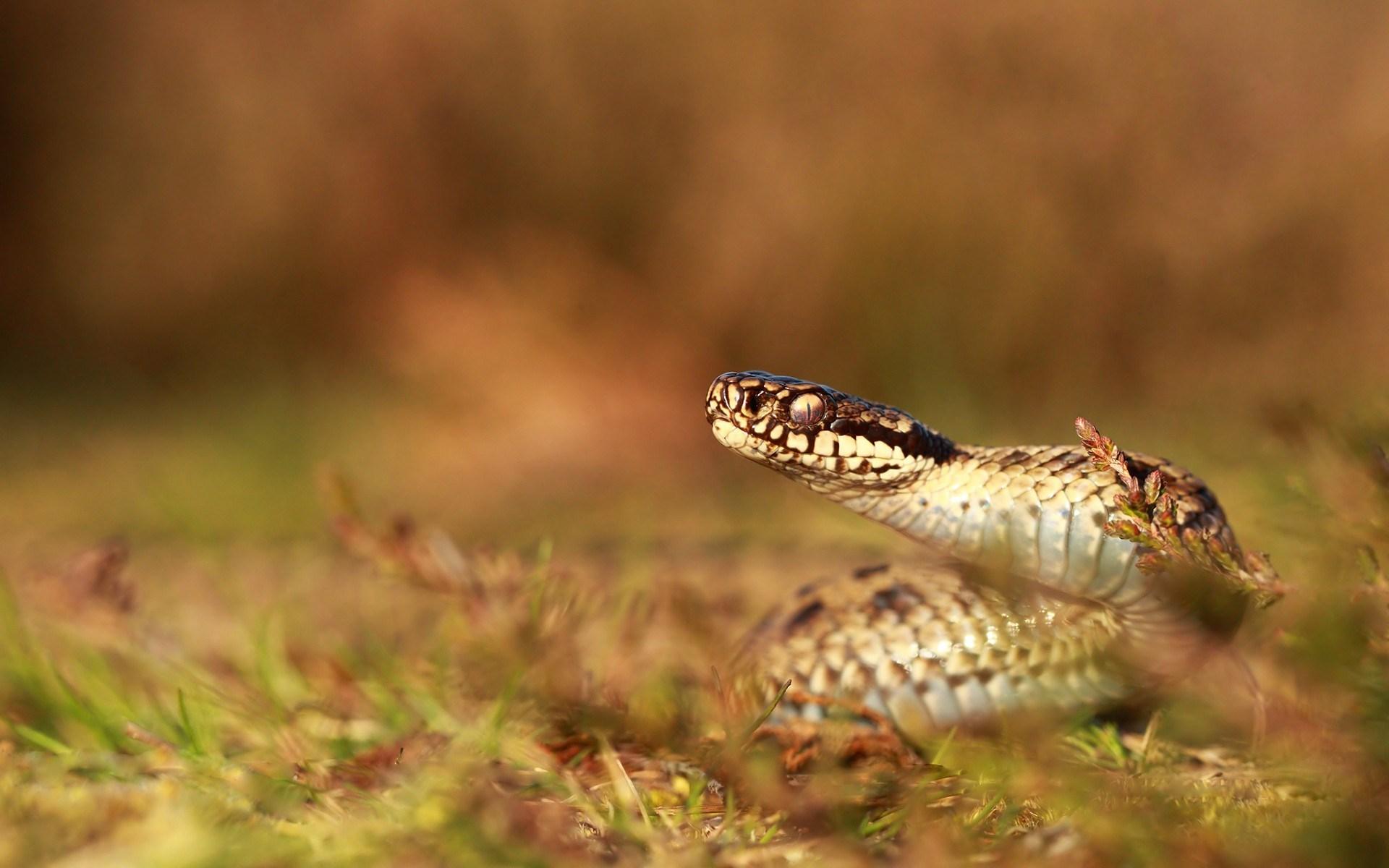 snake wild