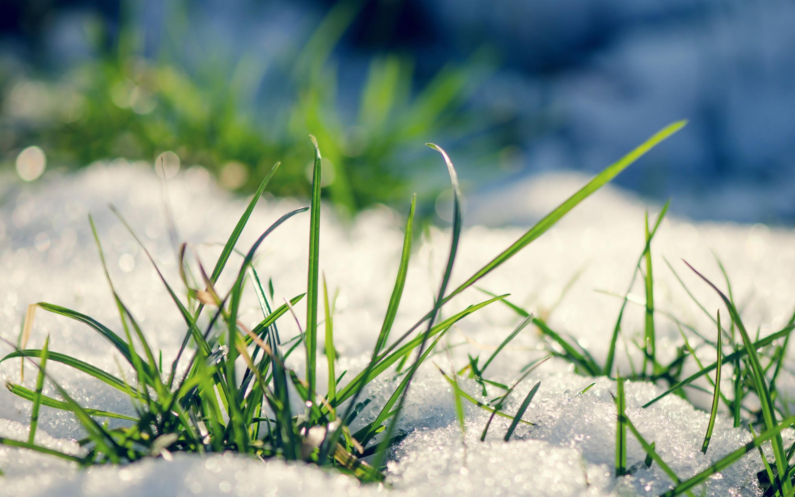 snow wallpaper grass