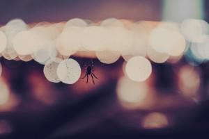 spider bokeh wallpaper