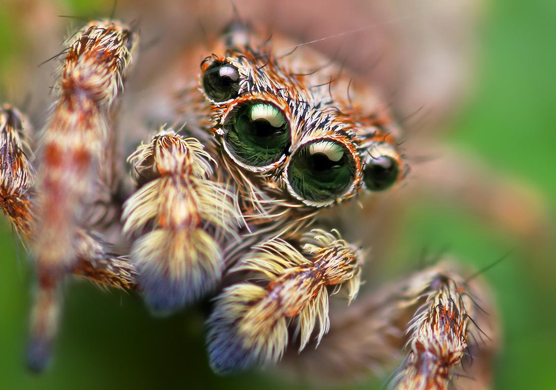 spider cool wallpaper
