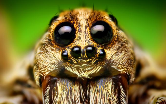 spider funny wallpaper