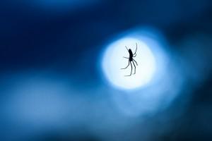 spider web wallpaper
