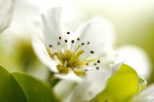 spring hd photos