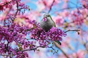 spring wallpaper bird