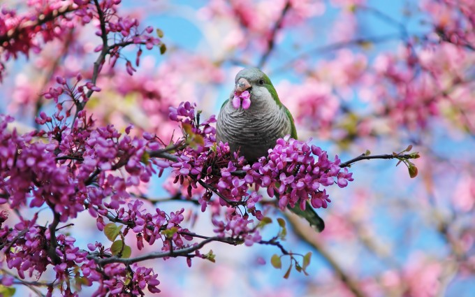 spring wallpaper bird