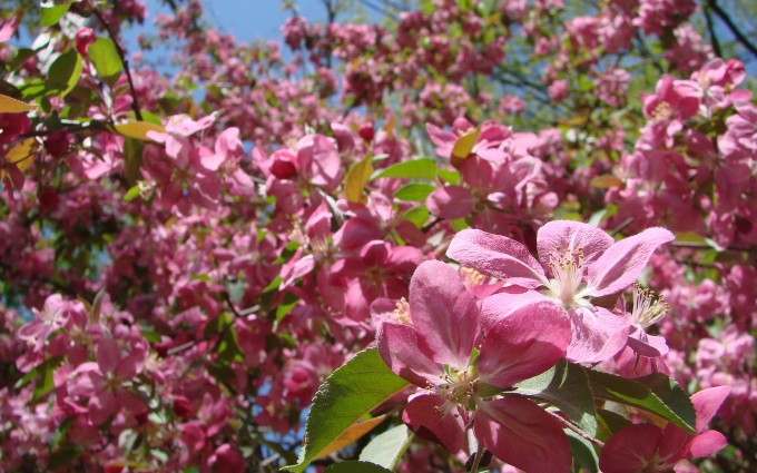 spring wallpaper garden
