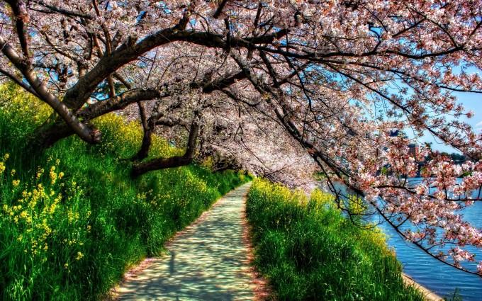 spring wallpaper landscape hd
