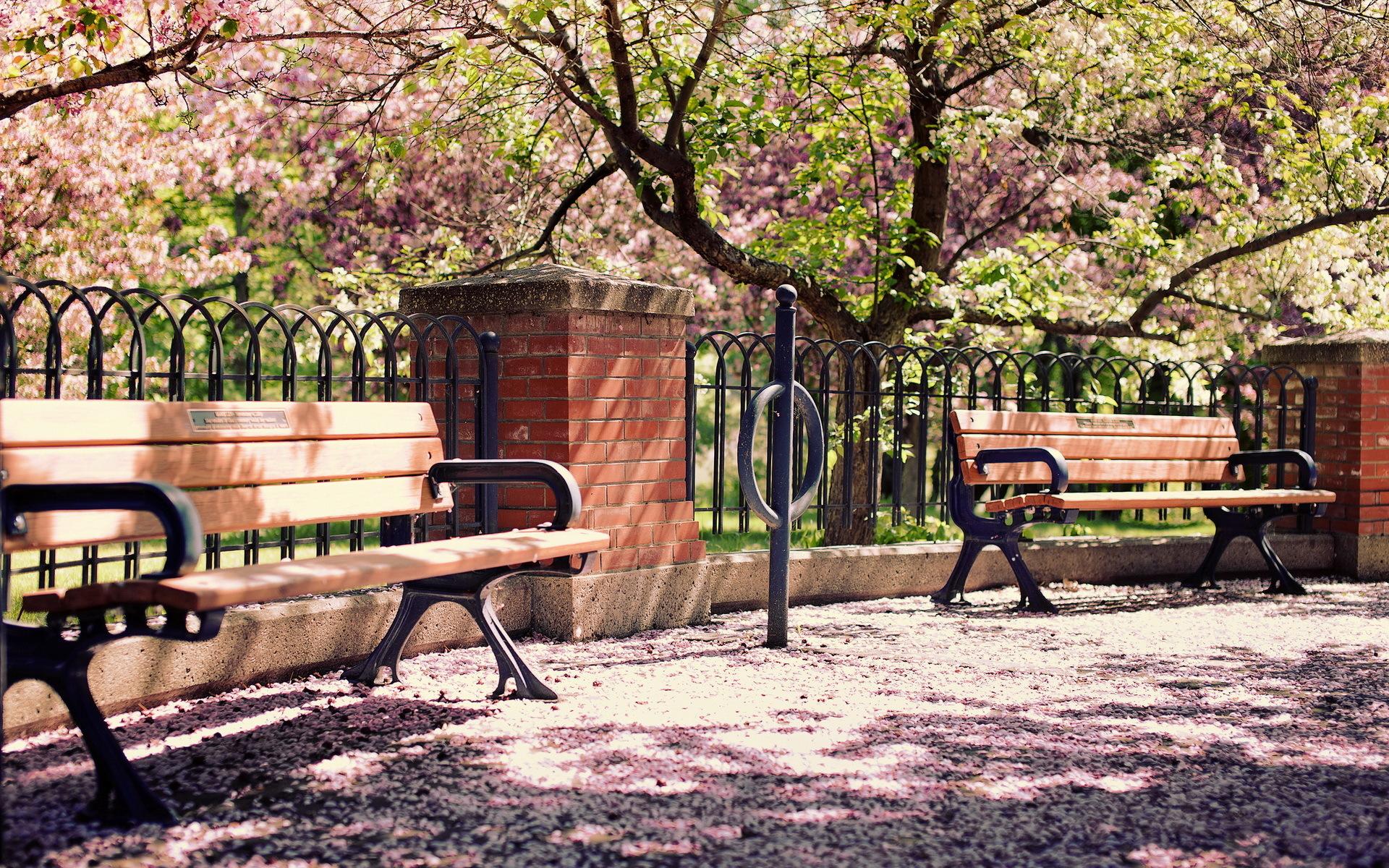 spring wallpaper park