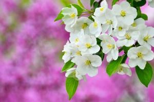 spring wallpaper sapling
