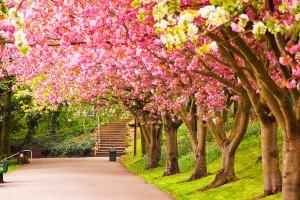 spring wallpaper trees cute