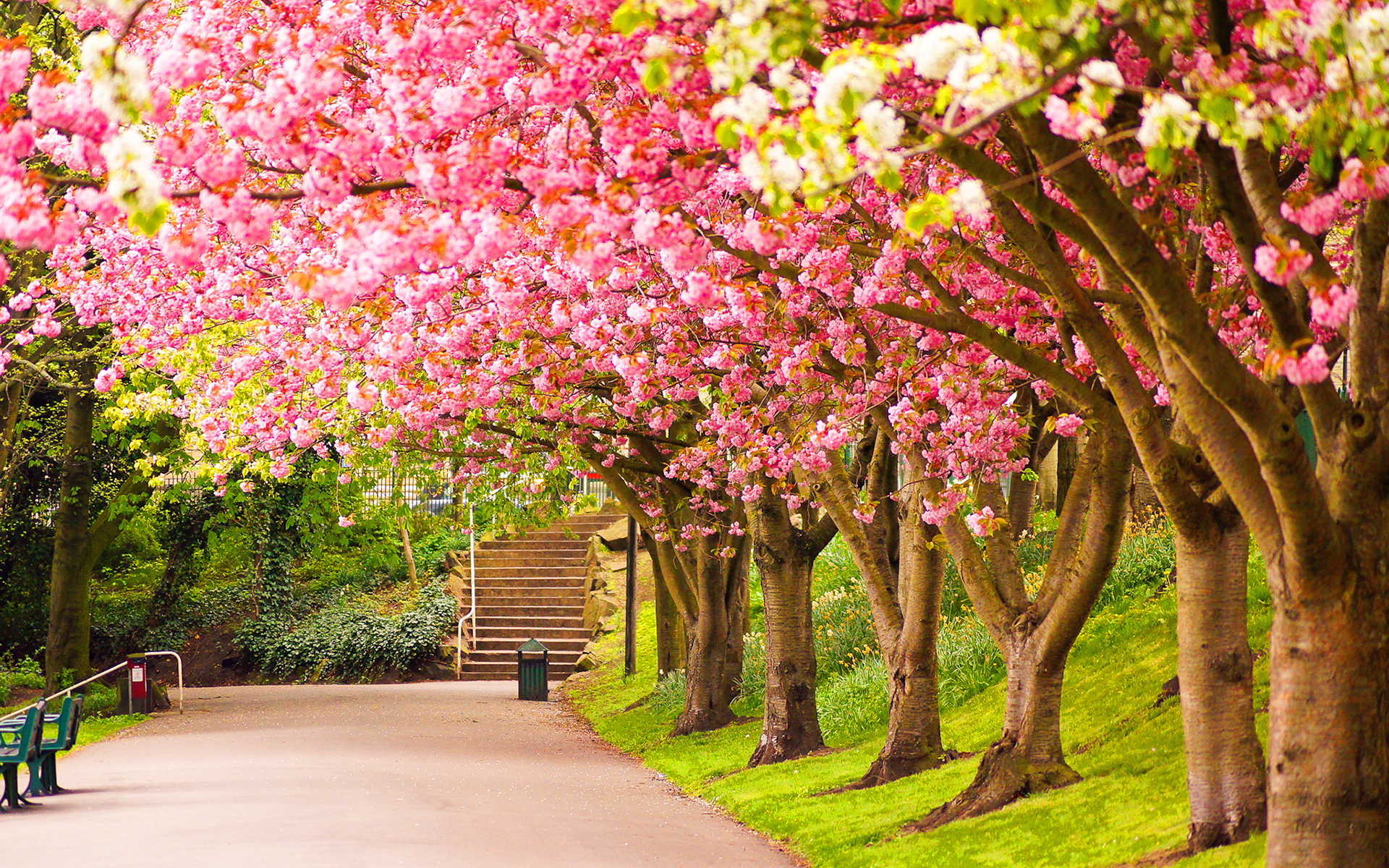 spring wallpaper trees cute