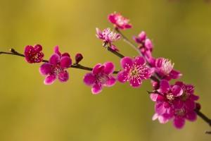 spring wallpaper twig