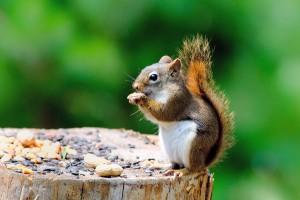 squirrel cute images
