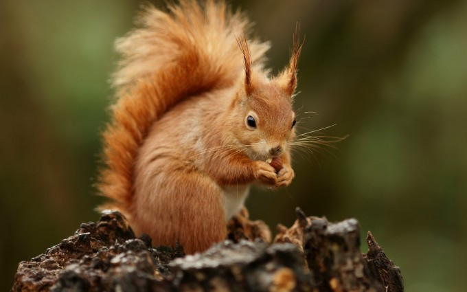 squirrel wallpaper cute