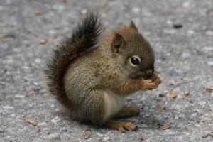 squirrel wallpaper hd pc
