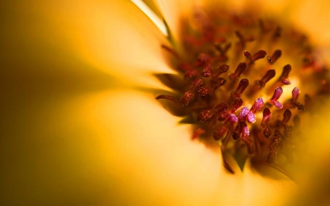 stamens flowers