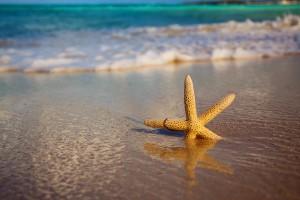 starfish beach shore