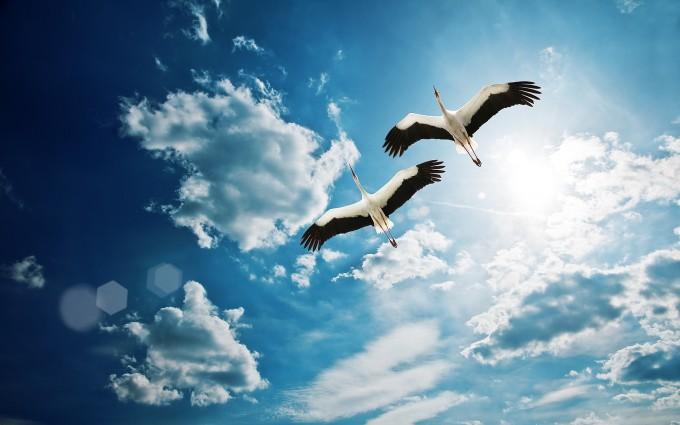 storks birds