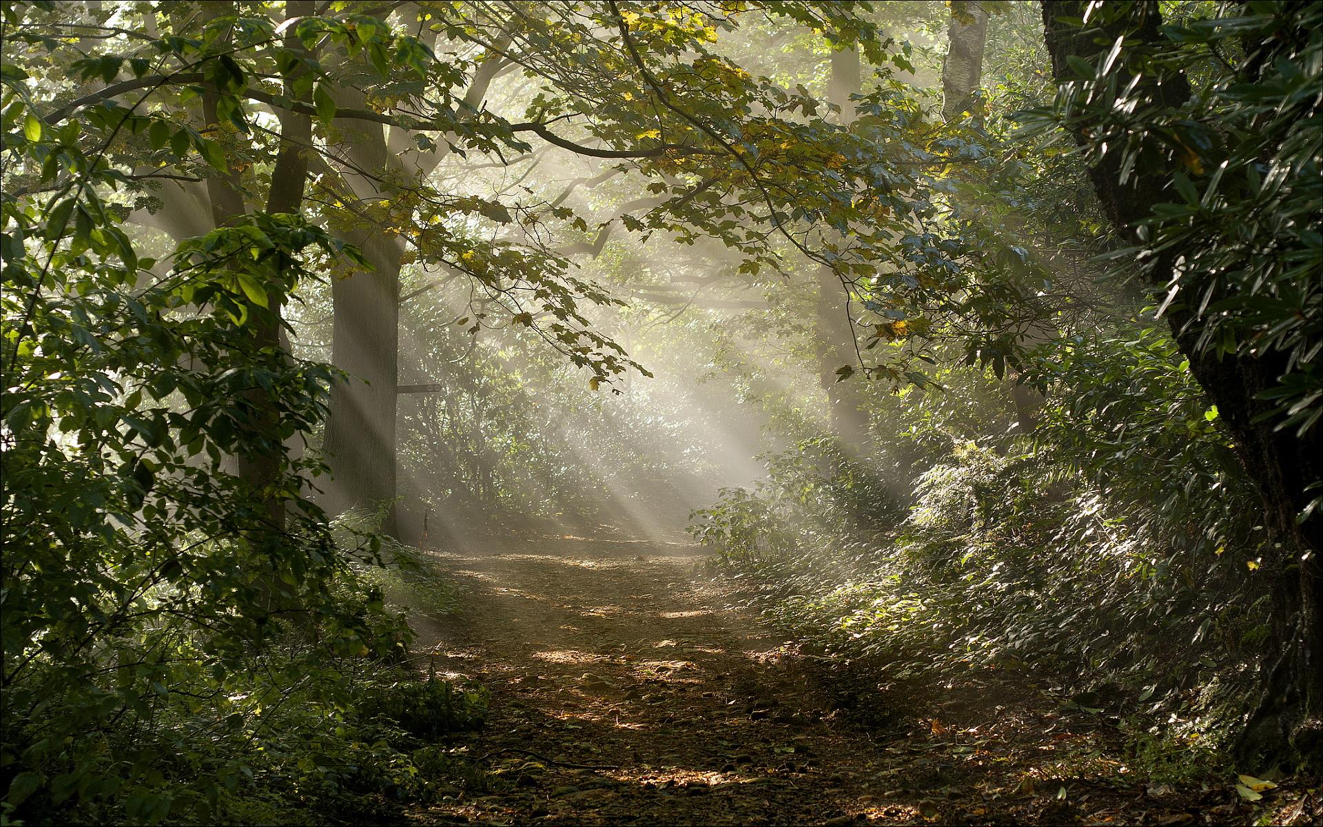 stunning forest