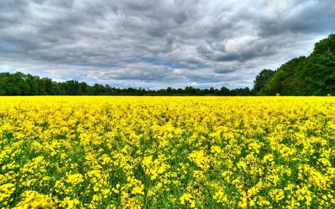 summer flowers field background