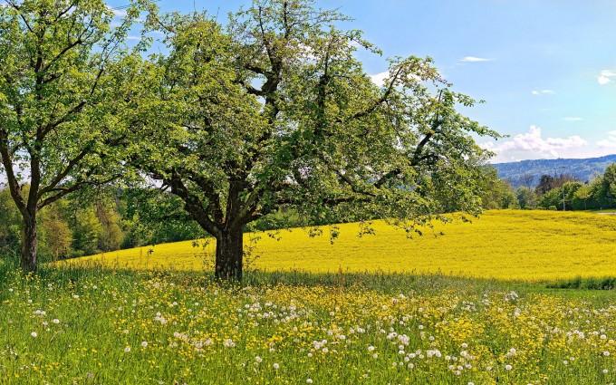 summer nature landscape