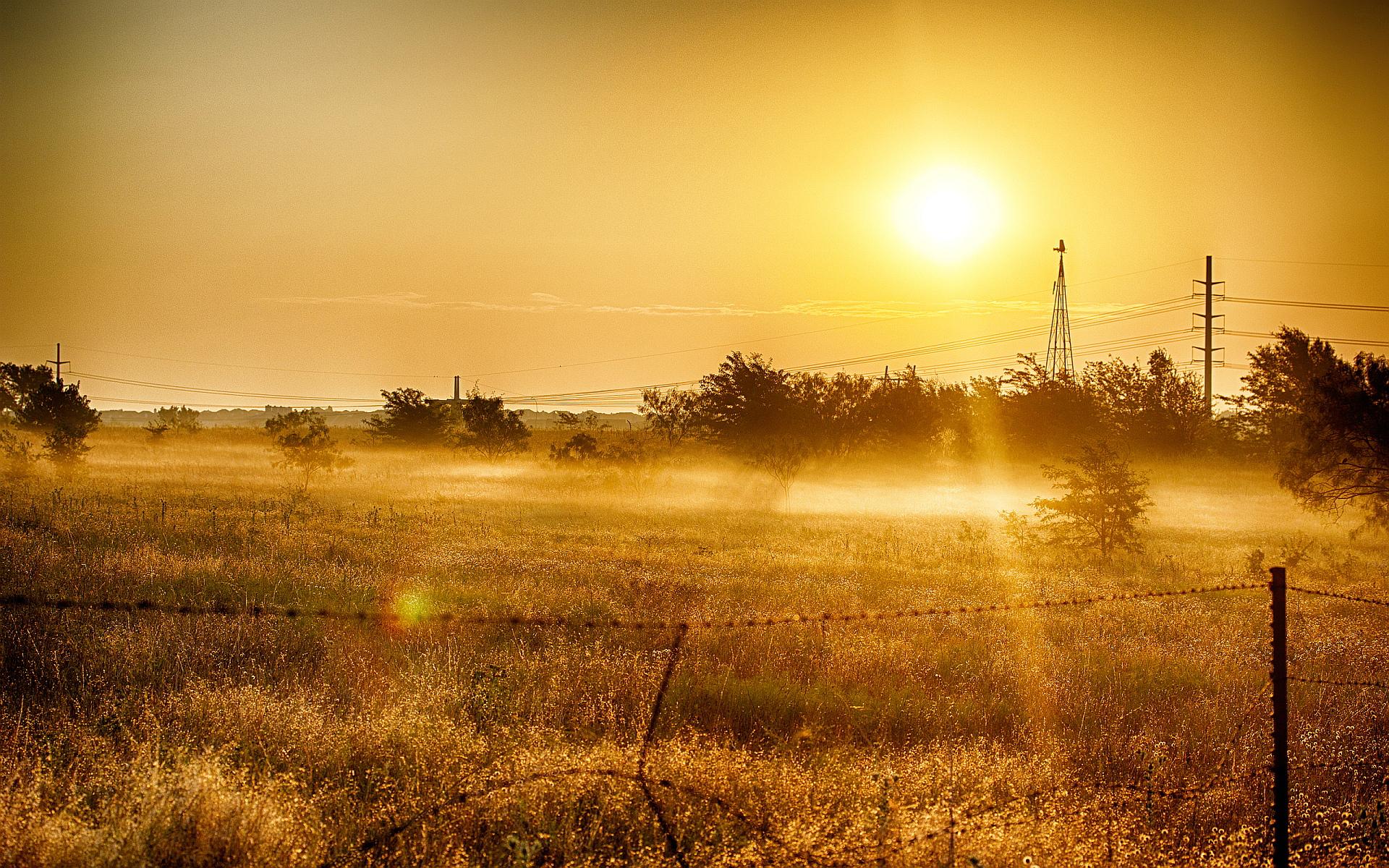 summer sunset field