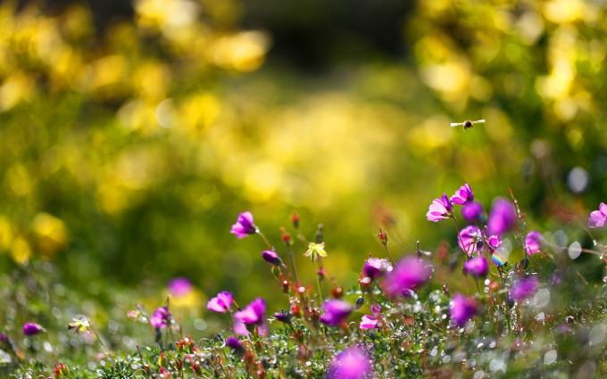 summer wallpaper flowers bees