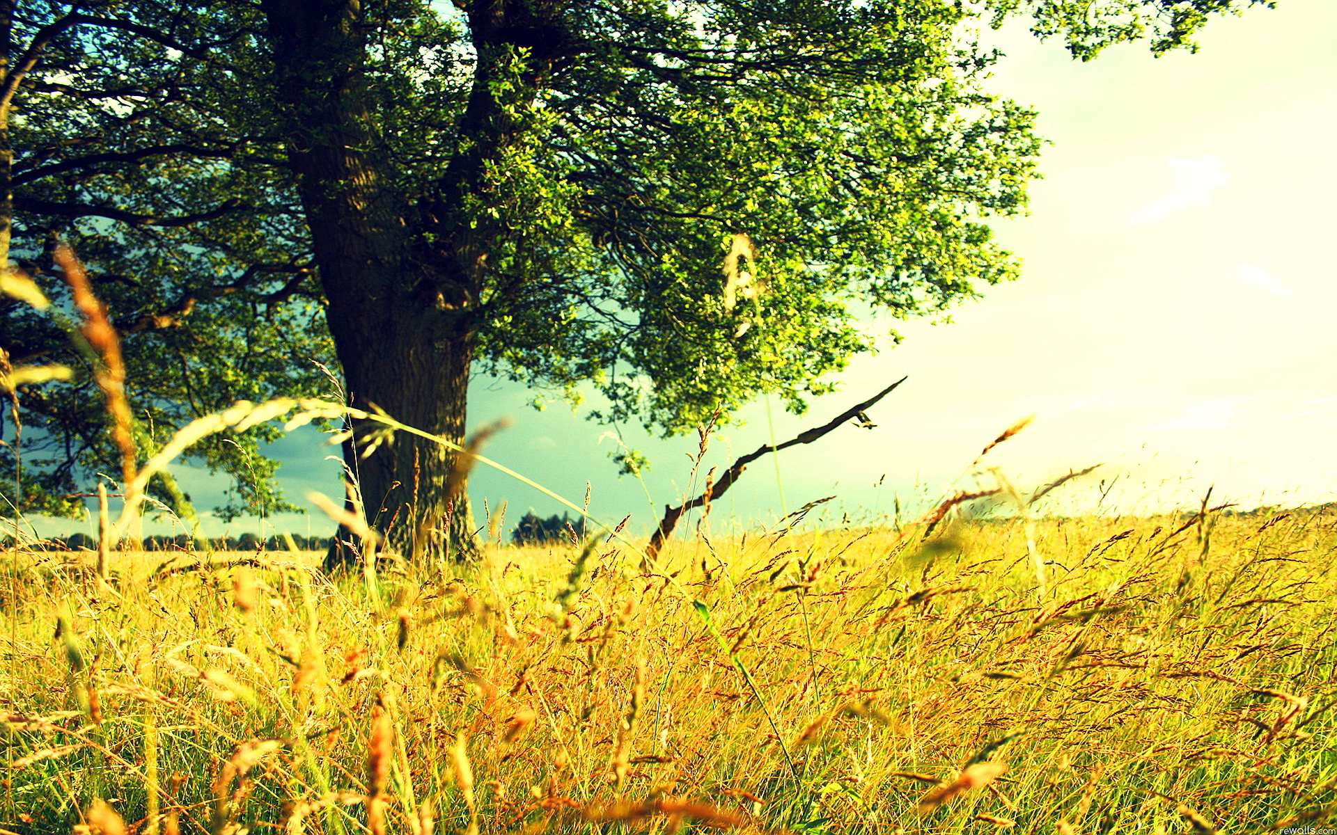 summer wallpaper landscape