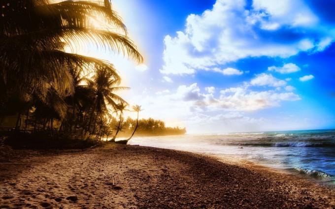 summer wallpaper palms