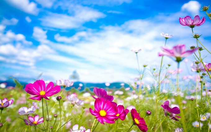 summer wallpaper pink flowers