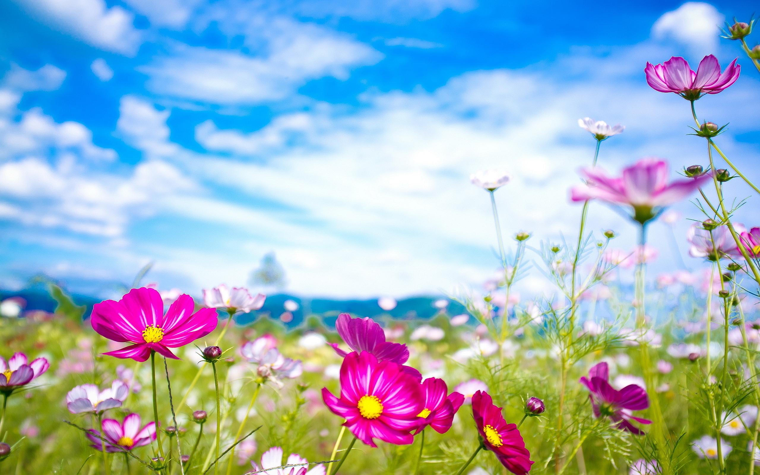 summer wallpaper pink flowers