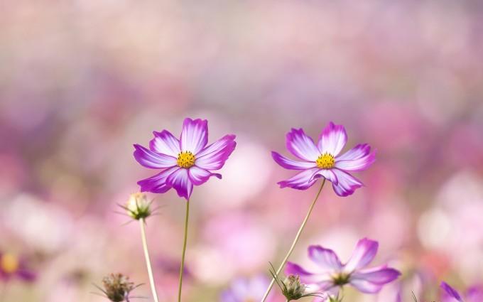 summer wallpaper purple flowers