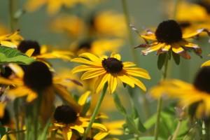 summer wallpaper yellow flowers