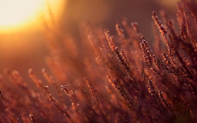 sunlight wallpaper plants