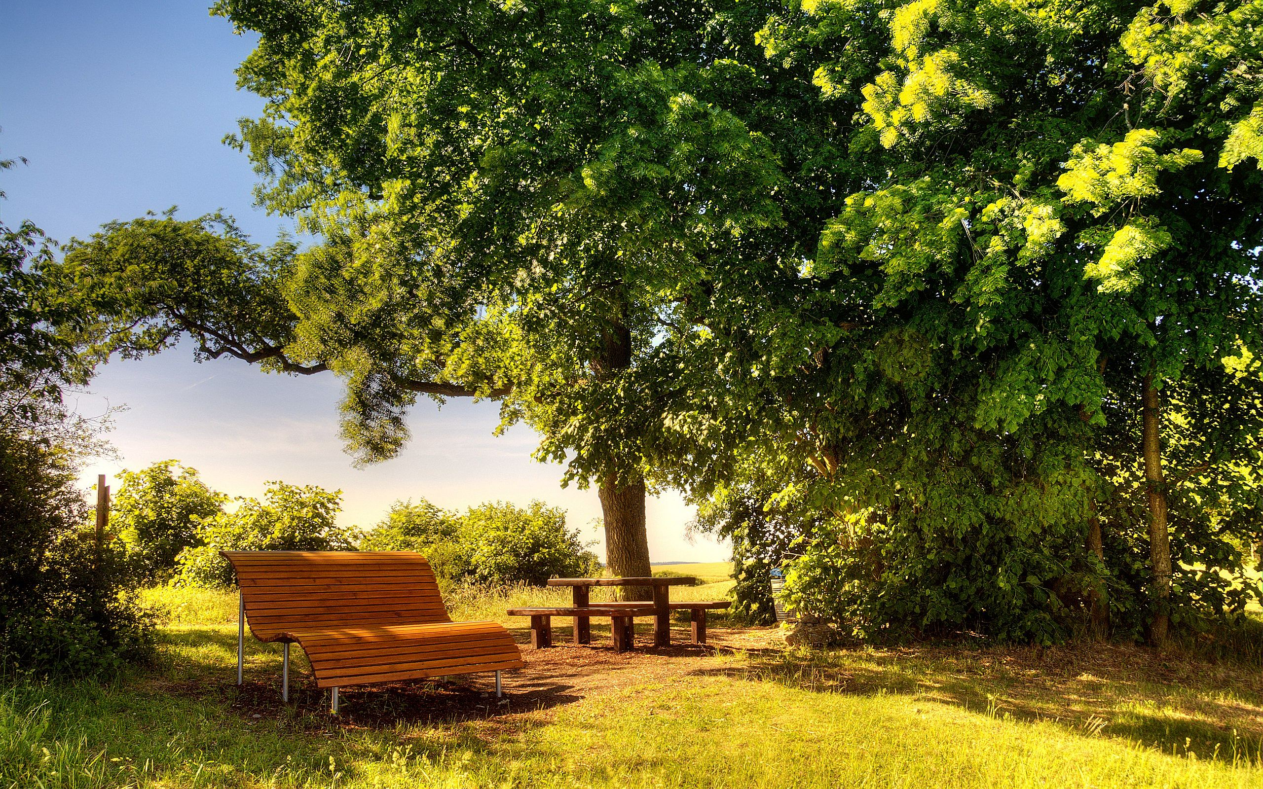 sunny day bench