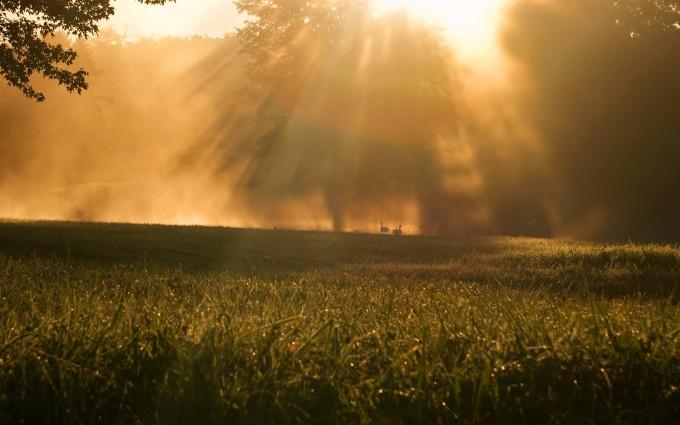 sunrise pictures swans