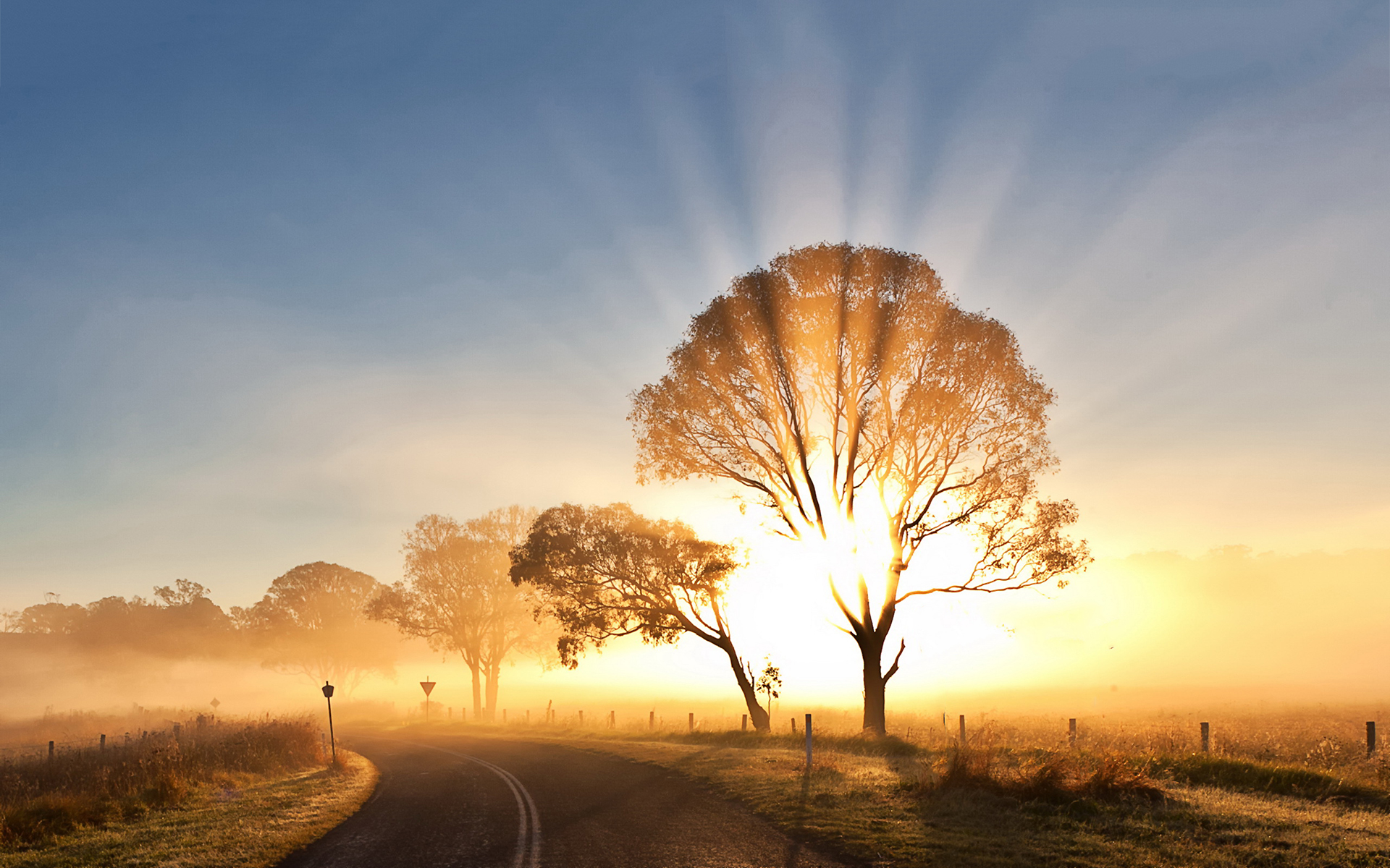 sunrise pictures trees