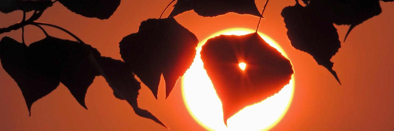 sunrise wallpaper silhouette hd desktop wallpapers